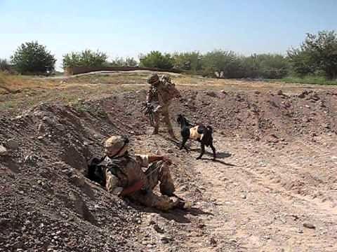 Talibska koza szuka atencji...