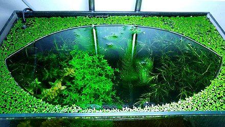 Kojące akwarium
