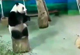 (Prawie) Kung Fu Panda