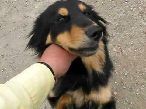 Franek - pogodny pies bez przednich łap