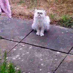 Kot o szalonym spojrzeniu