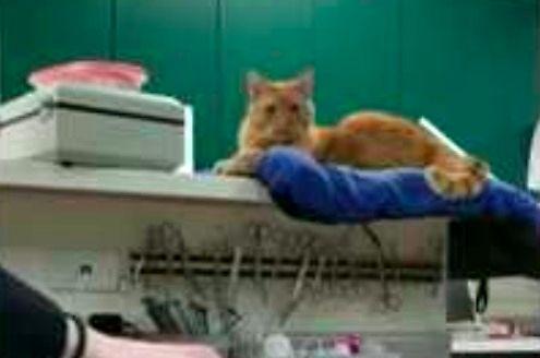Uzależniony kot
