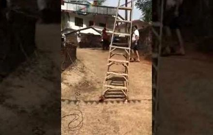 Drabina w Indiach poszła sobie na spacer