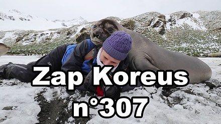 Kiedy pies trolluje twój stream, czyli kompilacja Zap Koreus n°307