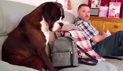 Wstydliwy pies podgląda jak pan je kanapkę
