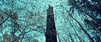"""""""Życie drzewa"""", czy Podlasie umie w filmy"""