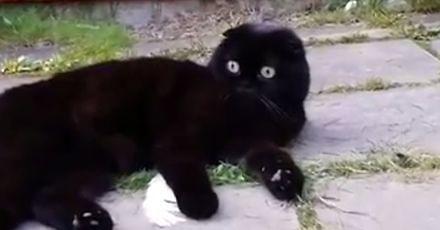 Kotecek zobaczył coś upiornego
