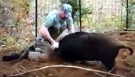Facet w Teksasie walczy z dzikiem gołymi rękami