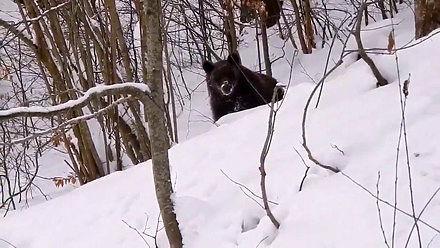 Krótka rozmowa leśniczego z niedźwiedziem