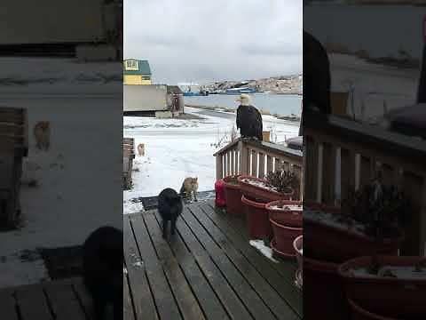 Niespodziewani goście na Alasce