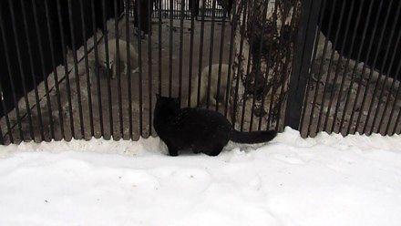 Czarna kotka z Czelabińska terroryzuje psowate w zoo