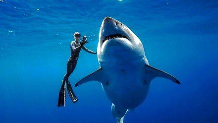 Przerażająco wielki rekin jak z cholernych Szczęk