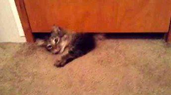 Ten kot tak naprawdę jest cieczą