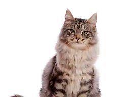 Kot od małego do dużego
