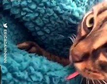 Kot polizał koc i szybko zrozumiał swój błąd