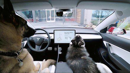 Tesla wprowadziła psi tryb