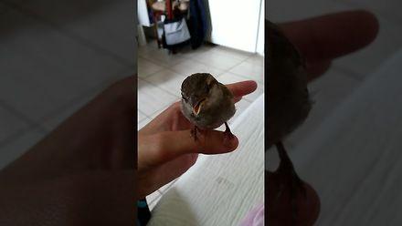 Reakcja ptaszka na kobiecy śpiew