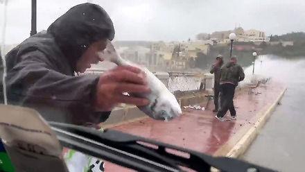 Sztorm na Malcie wyrzuca ryby na ulicę