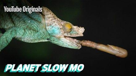 The Slow Mo Guys pokazują atak kameleona, węża i żółwia
