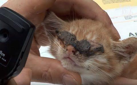 Dobre ziomki pomagają ślepemu kotkowi