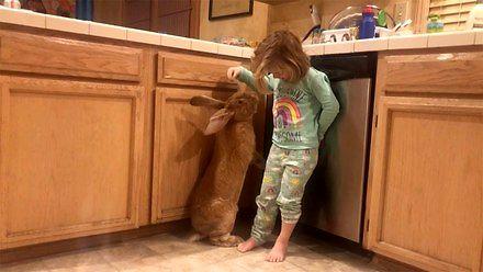 Najlepszy przyjaciel dziewczynki. Ogromny królik