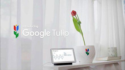 Porozmawiaj z kwiatkami dzięki Google Tulip