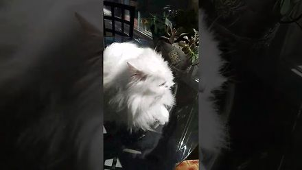 Przez 3 lata nagrywała reakcje głuchego kota na jej powrót do domu