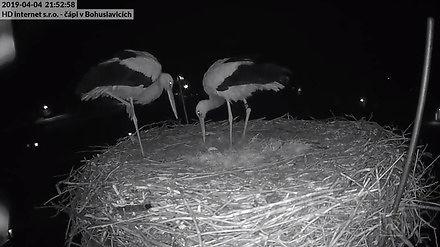 Bociania para cieszy się z pierwszego jaja
