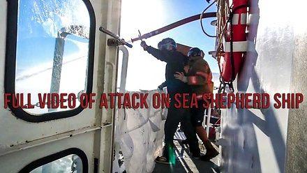 Bitwa morska w rezerwacie morświnów kalifornijskich