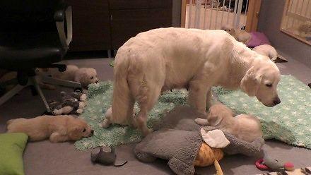 Psia mama uczy dzieci spokoju