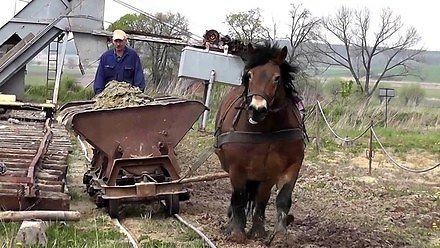 Cegielnia Bojanice korzystająca z pomocy konia