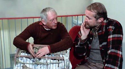 """""""Gołąb musi 3 razy dziennie regularnie bujać"""" - Józef Balcerek - wszystkie anegdoty"""