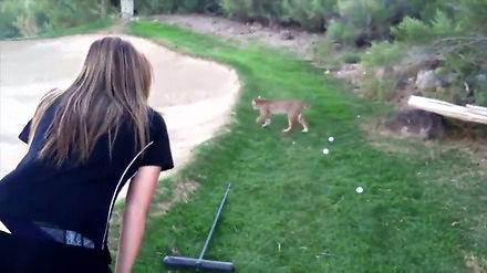 Spotkanie ślicznej dziewczyny i uroczego rysia na polu golfowym