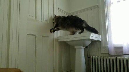 Kot poradzi sobie nawet z taką klamką