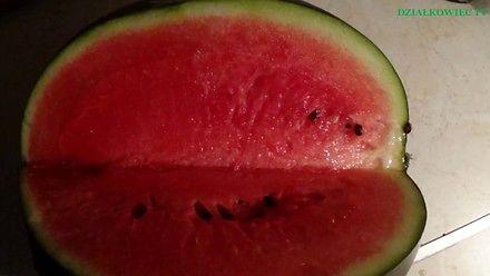 Uprawa arbuza w Polsce - to nie takie trudne!
