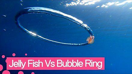 Co się stanie, jak meduza wpłynie w bąbel powietrza?