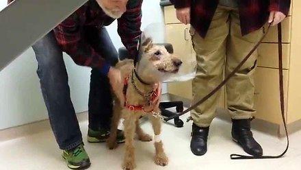 Pies odzyskał wzrok i po raz pierwszy od dawna zobaczył swoich właścicieli
