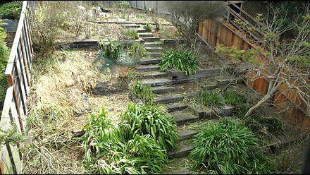 Kozy koszą ogródek w 6 dni