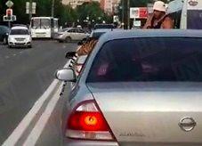 Kotek chciał mu uciec na drodze w Rosji