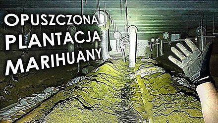 Opuszczona plantacja marihuaen warta miliony