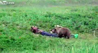 Na Kamczatce to niedźwiedzie cię budzą