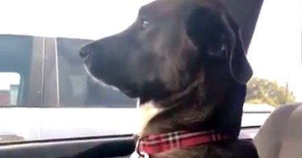 Pies obraził się na swoją panią