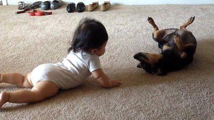 Dziecko i piesek poznają się