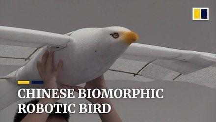 Ptak jak prawdziwy, ale to robot