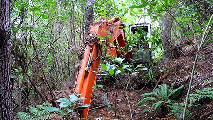 Koparka 16 lat spędziła w lesie