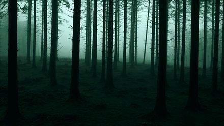 Łąki Łan i piękna piosenka o lesie