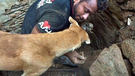 Pies pomagał ratownikom kopać, żeby uratować szczeniaki