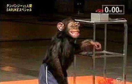 """Małpa pokonuje tor """"Ninja Warrior"""""""
