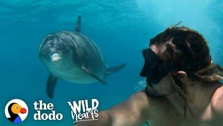 Bliskie spotkanie z przyjaznym delfinem