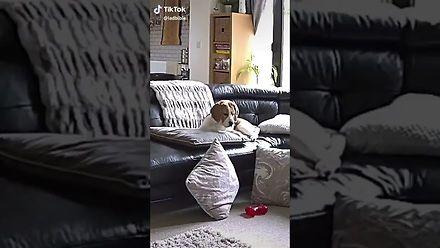 Prawdziwy dramat w życiu psa